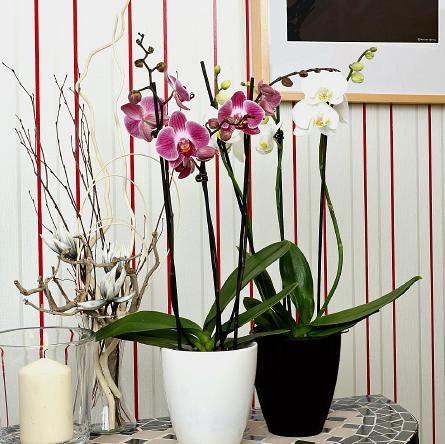 Najlepsze Kwiaty Do łazienki Sprawdź Co Wybrać